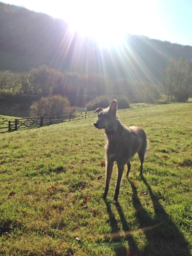 Ellie In The Secret Valley Near Hawkesbury