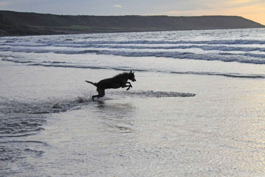 Ellie Leaping Into The Sea After A Tennis Ball