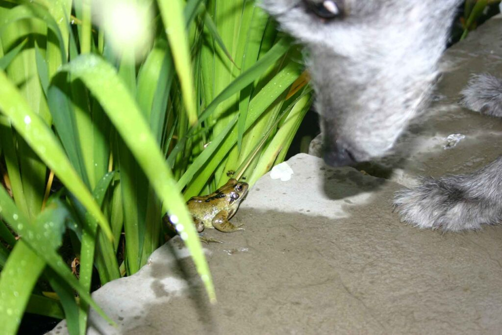 Ellie Meeting A Frog