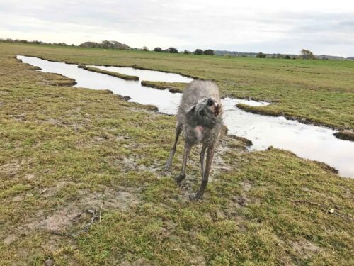 Ellie Caught Mid-Shake At Littleton-On-Severn