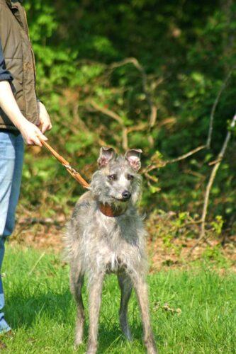 Ellie On Full Alert In Badminton Park