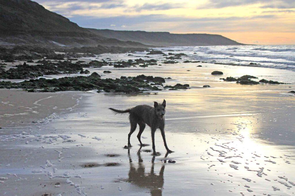 Ellie On Port Eynon Beach