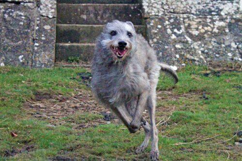 Ellie Running At Littleton-On-Severn