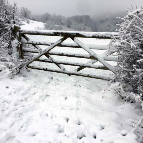 The Gate To Stumpy's Snowy Field