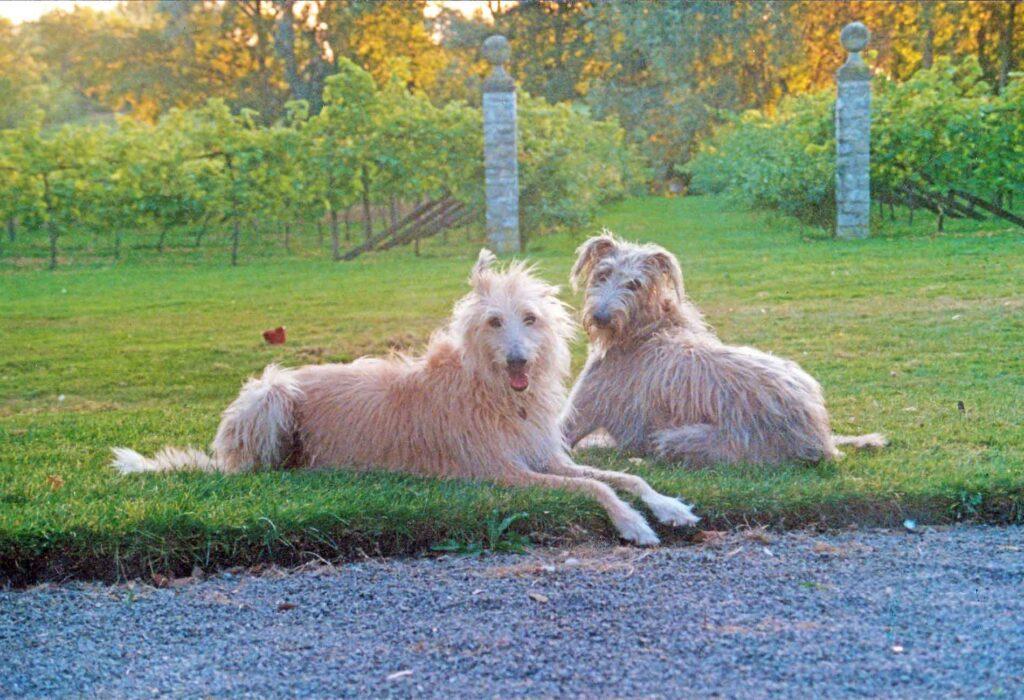 Robbie And Ferdie At Aust