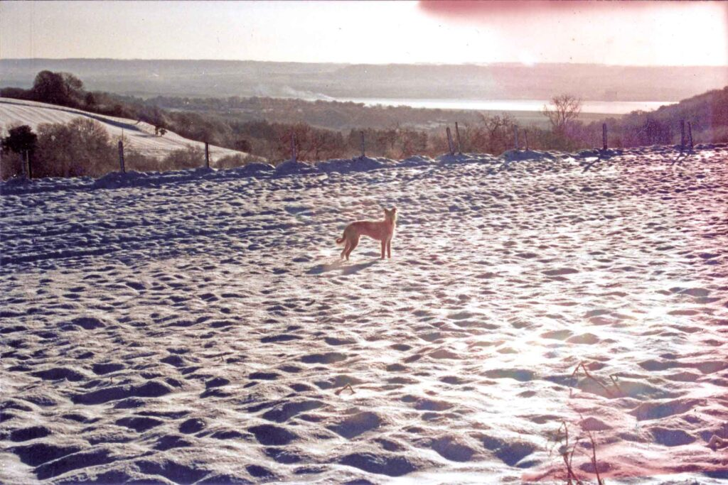 Robbie In A Snowy Field Overlooking The River Severn