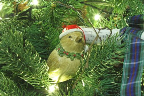 Robin in the Christmas Tree